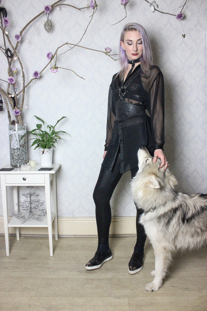 sheer shirt and harness with dog small